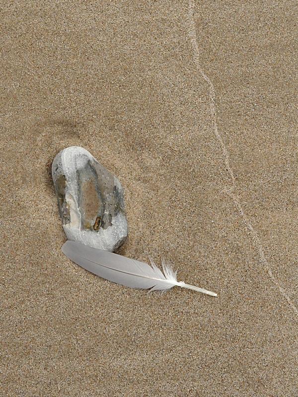 Stein und Federn am Strand
