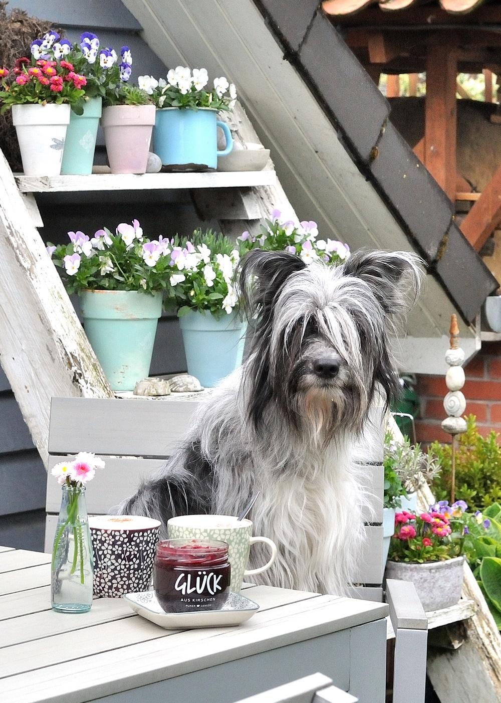 Hund auf Gartenstuhl